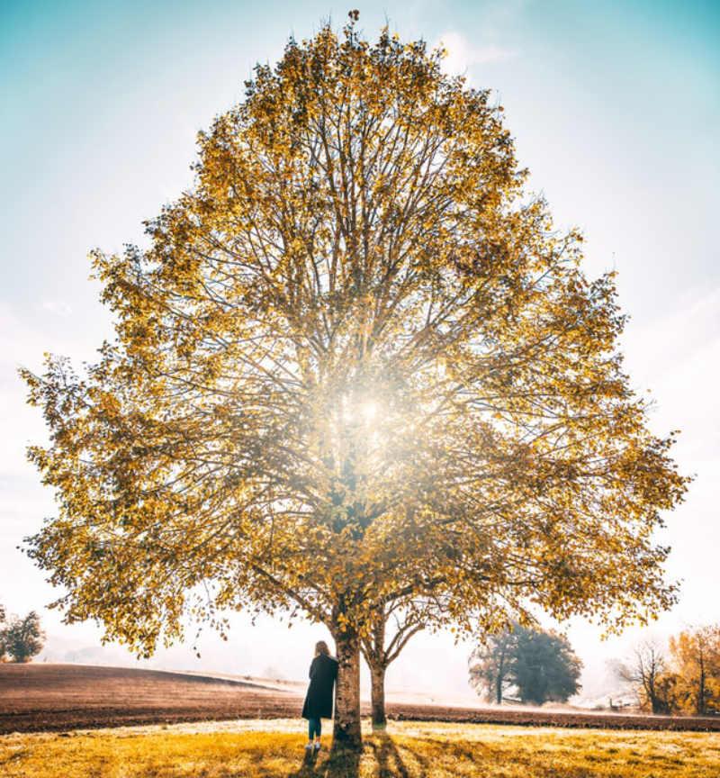 arbre de vie symbole